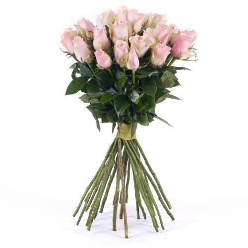 Amore ružové ruže