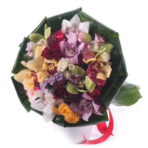 Lady farebné trsové ruže a orchidey