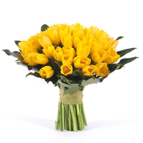 Perla žlté tulipány