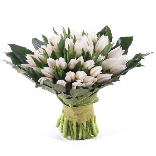 Perla biele tulipány