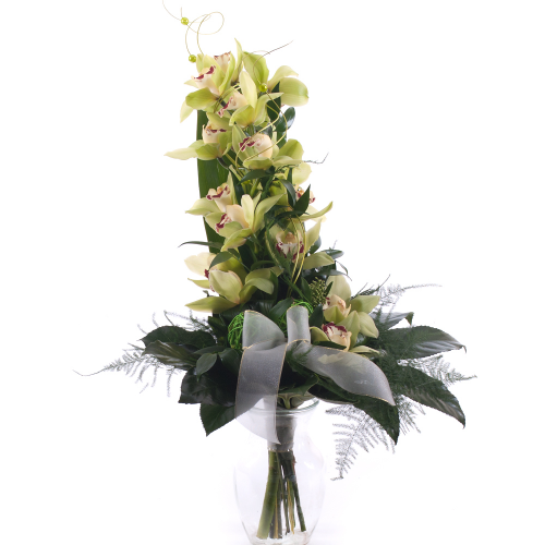 Orchidea zelená na vysoko