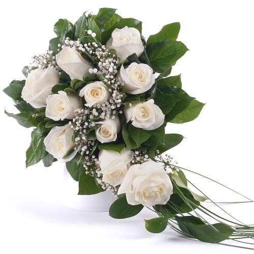 Prestige krémové ruže