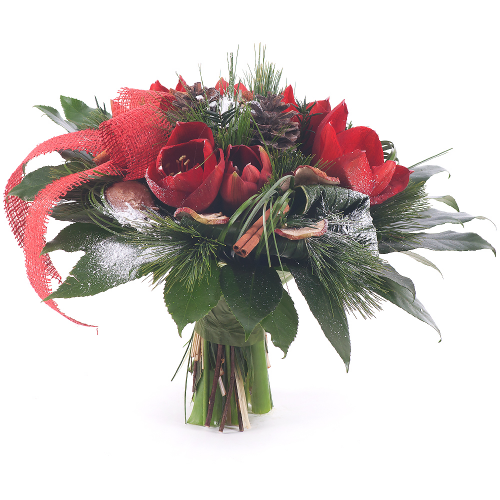 Perla červený amarylis vianoce