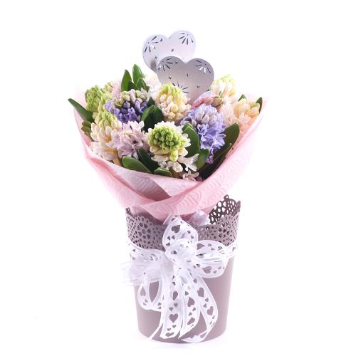 Kytica hyacintov hnedý flower pot