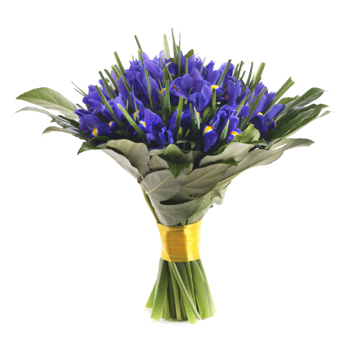 Perla modré irisy