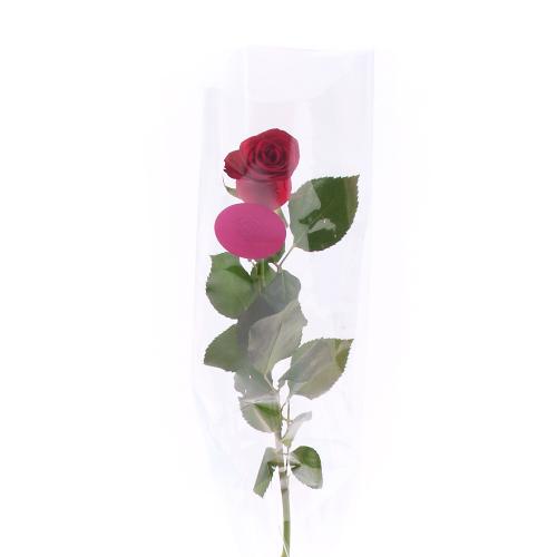 Ruža farebná v celofáne