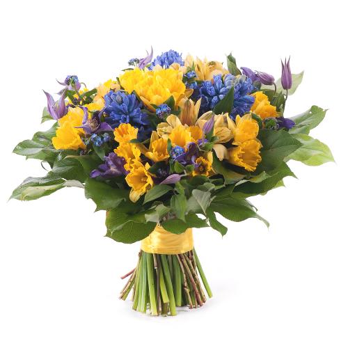 Elite žlté narcisy a modré hyacinty