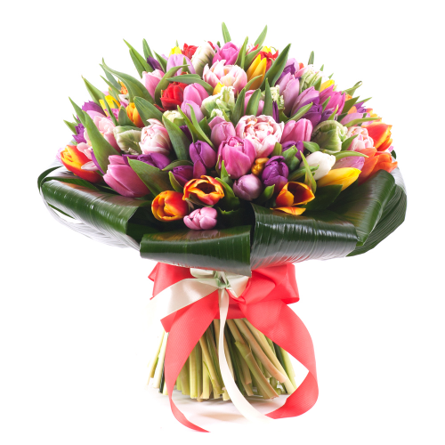 Passion farebné tulipány